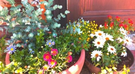 カフェ狐の周りの花たち